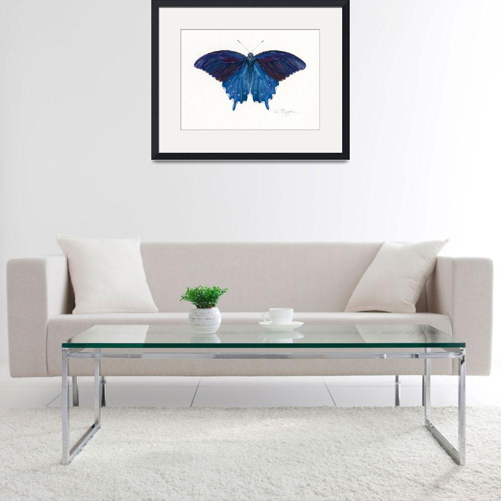 """""""Pipevine Swallowtail&quot  (2008) by LisaMclaughlin"""