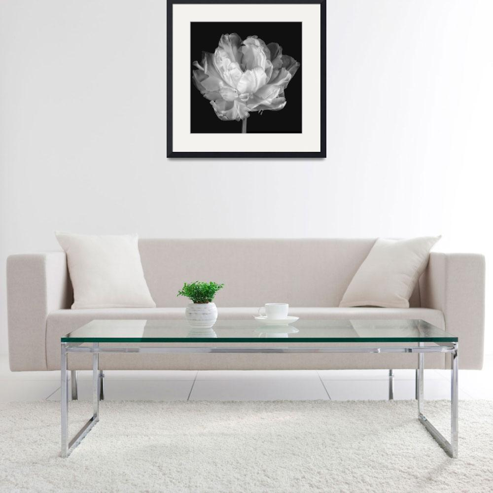 """""""White Double Tulip&quot  (2012) by CoraNiele"""