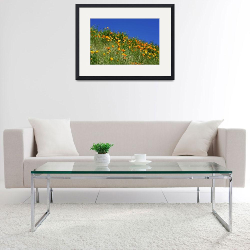"""Poppies Flowers Meadow Photography Art Prints&quot  (2014) by BasleeTroutman"