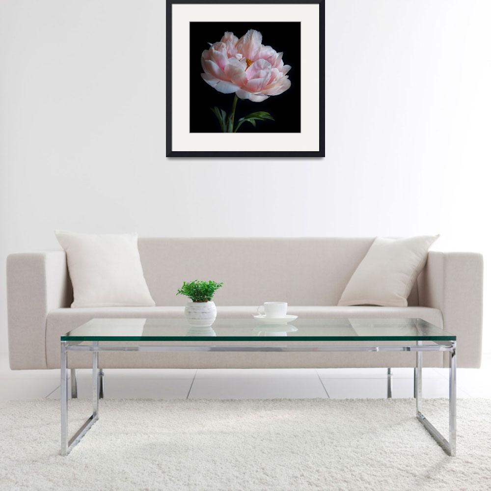 """""""Peony&quot  (2011) by JulieScholz"""