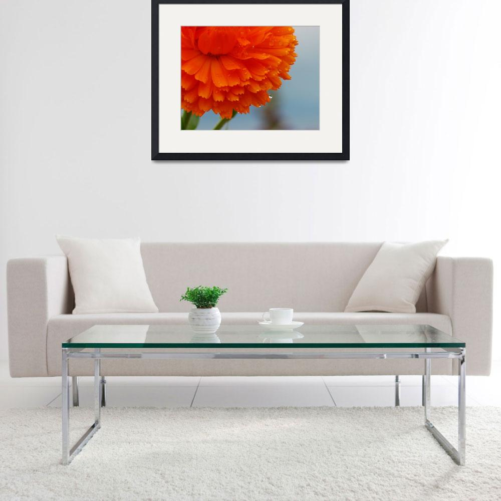 """Orange Dahlia - Large Format&quot  (2007) by peterdaveyphotography"