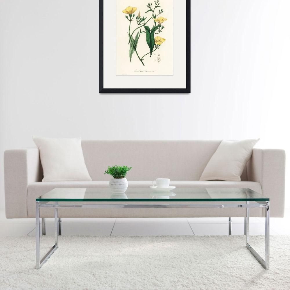 """Vintage Botanical Scammony&quot  by FineArtClassics"
