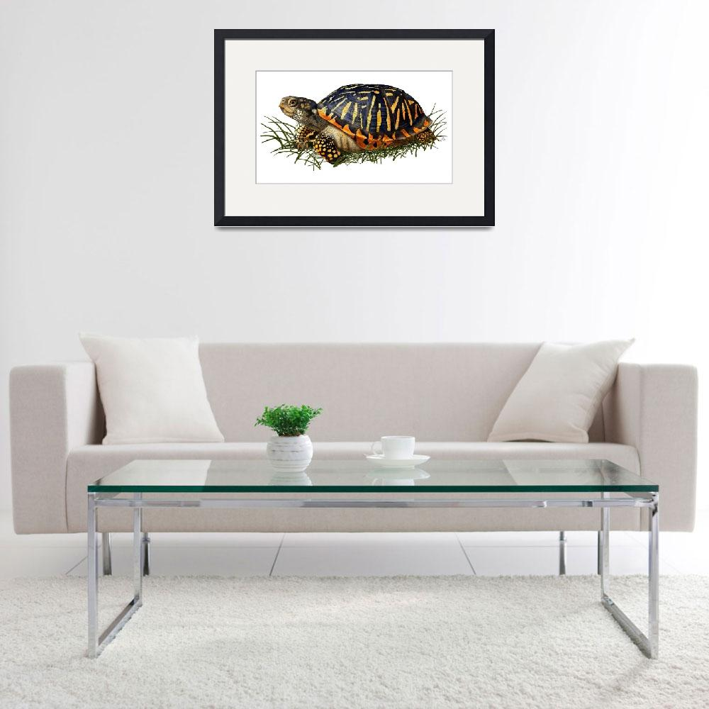 """Ornate Box Turtle&quot  by inkart"