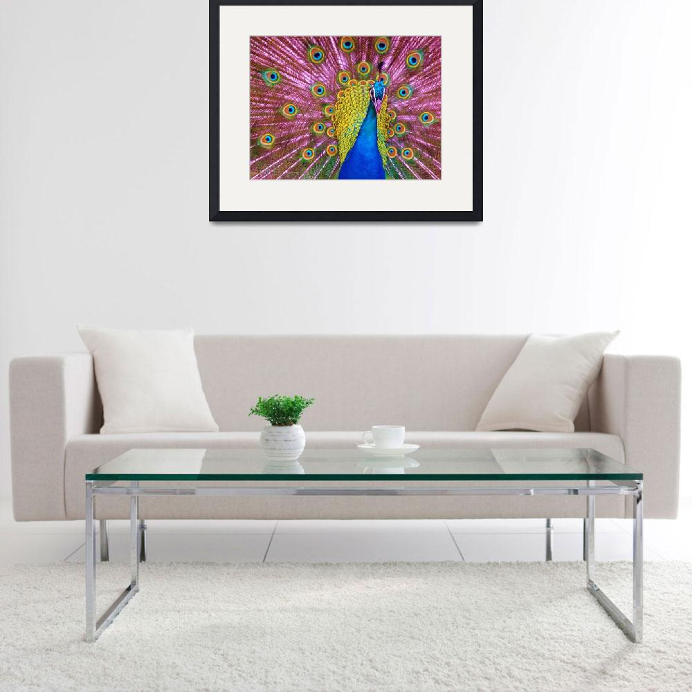 """""""peacock-eyed&quot  (2015) by gallerymay"""