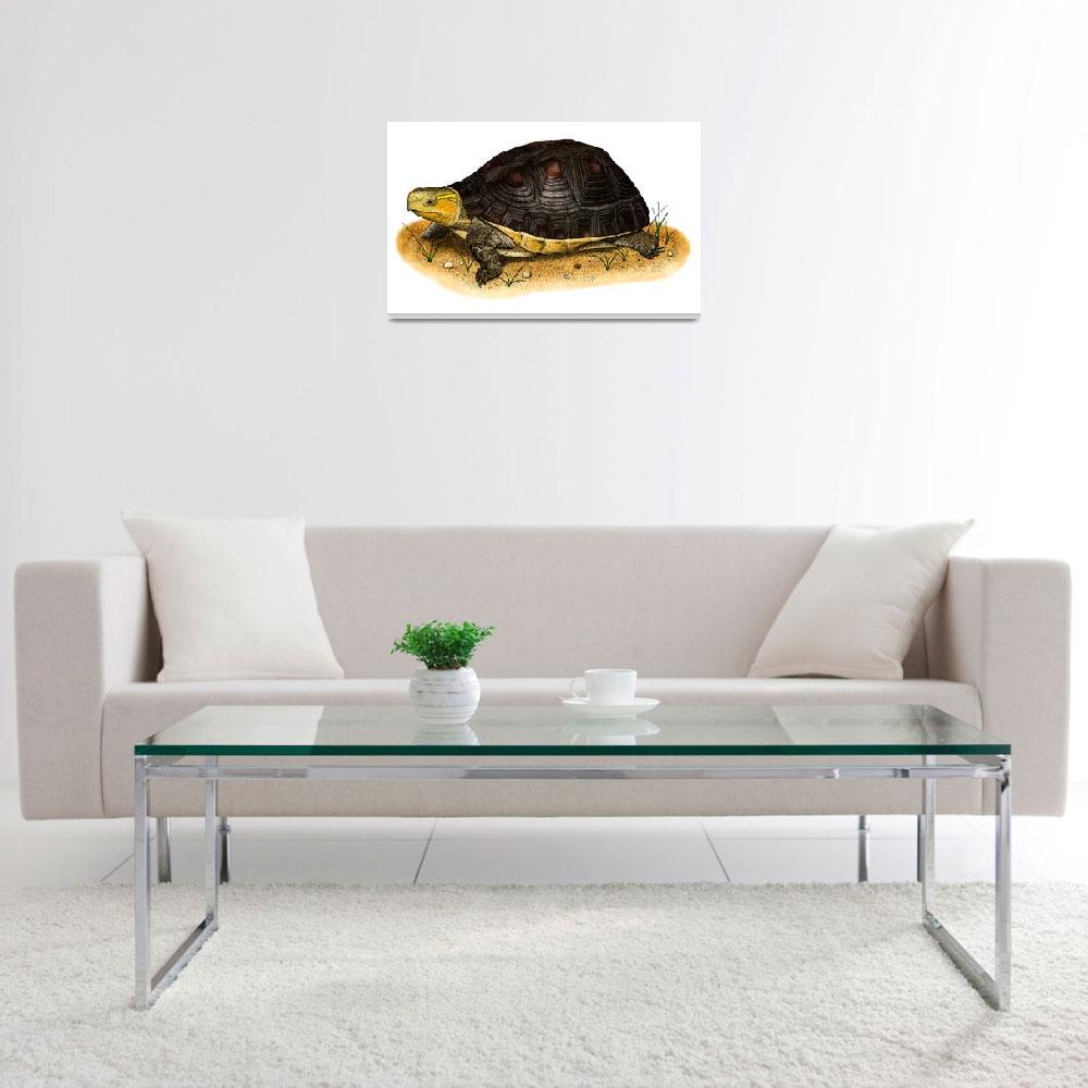 """""""Chinese Box Turtle""""  by inkart"""