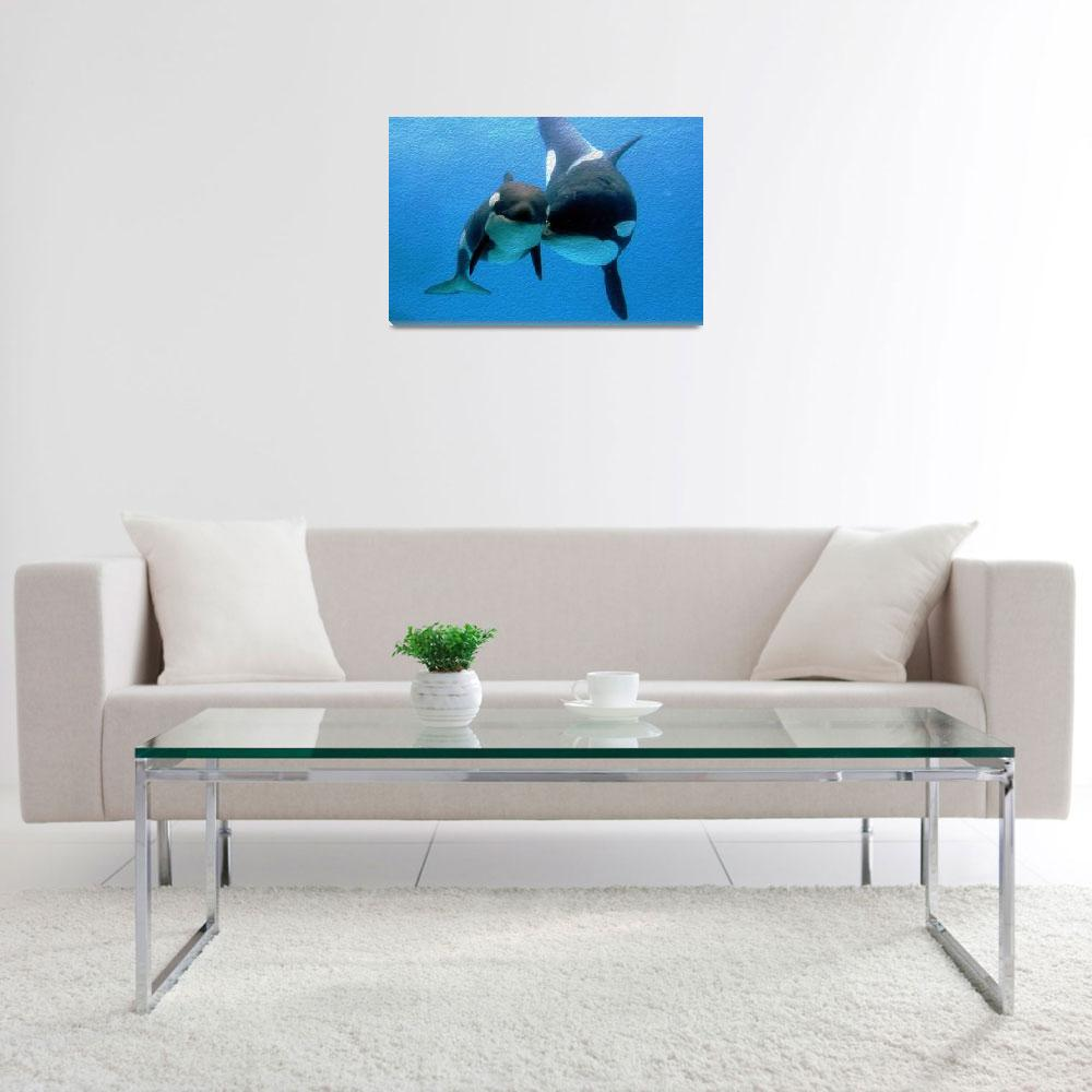 """""""Orca and Calf&quot  (2013) by netbrands"""