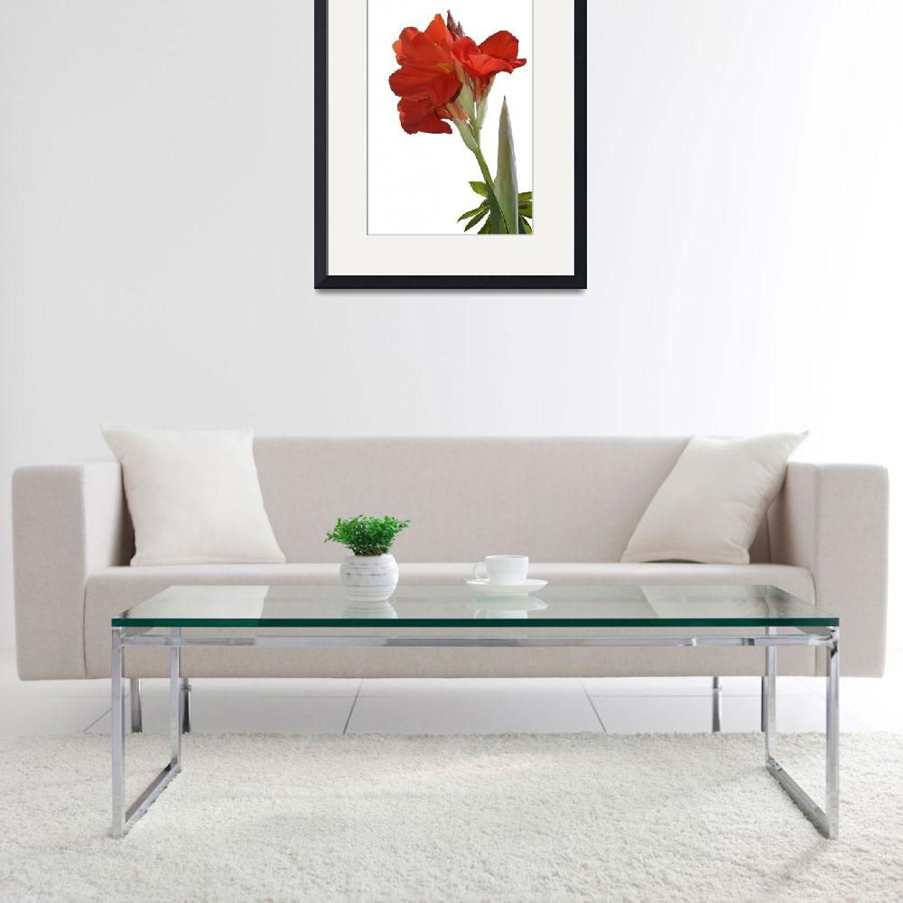 """""""Red Canna Lily  in bloom&quot  by eyalna"""
