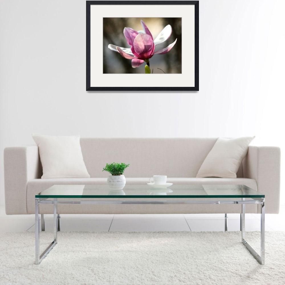 """""""Japanese Magnolia&quot  (2016) by Groecar"""
