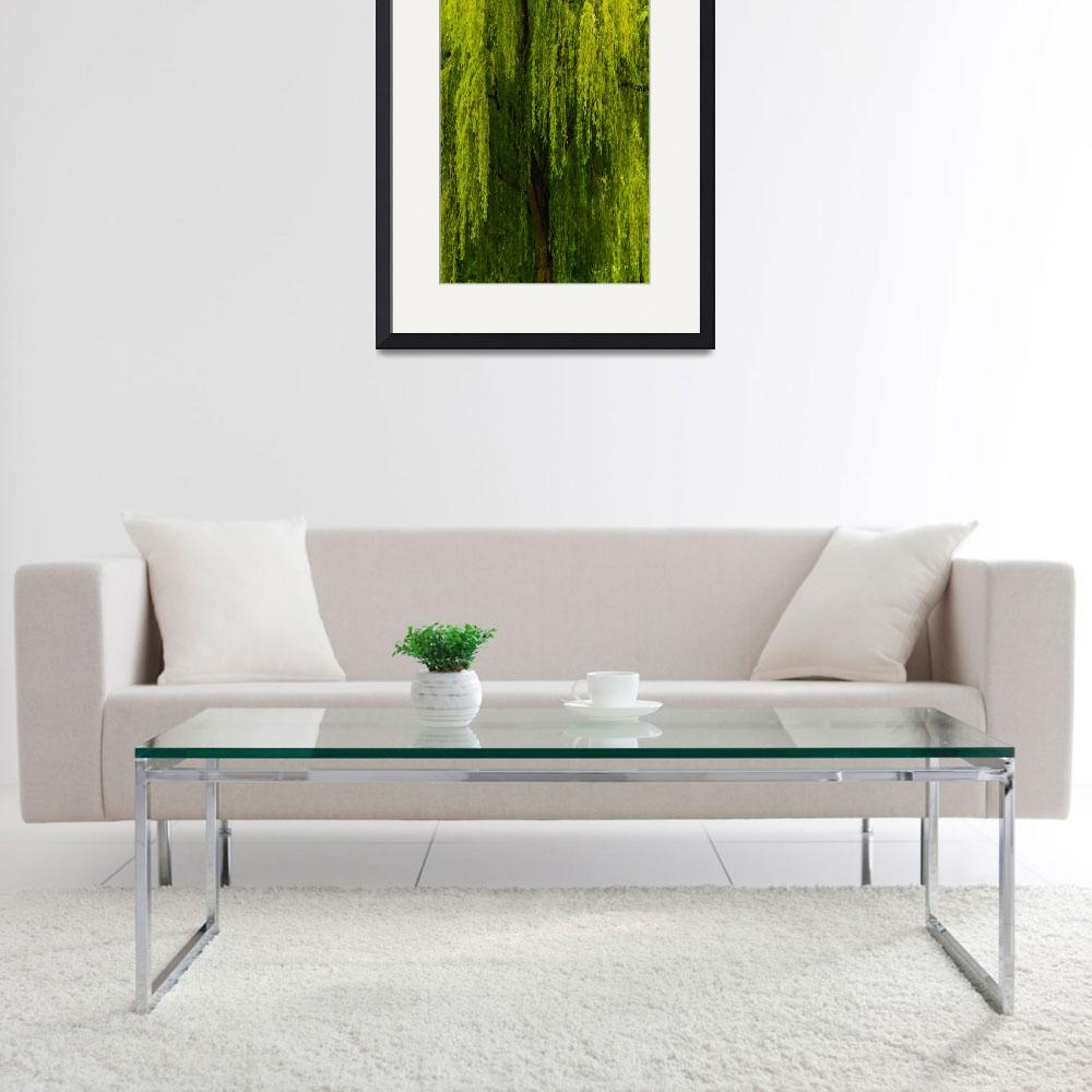 """""""Weeping Willow Tree Landscape Meditation Wall Art&quot  (2011) by PhotographsByCarolFAustin"""