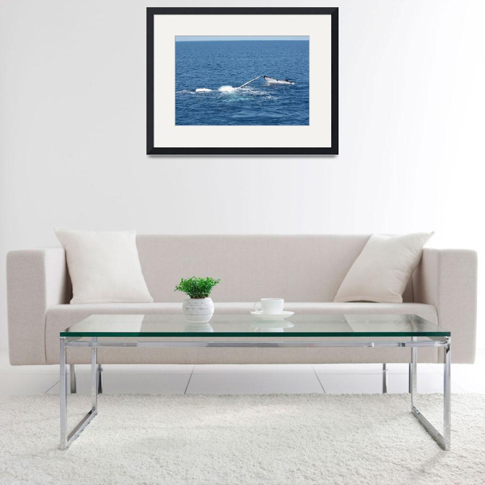 """""""NaP_ Whale Watching160&quot  by nevilleprosser"""