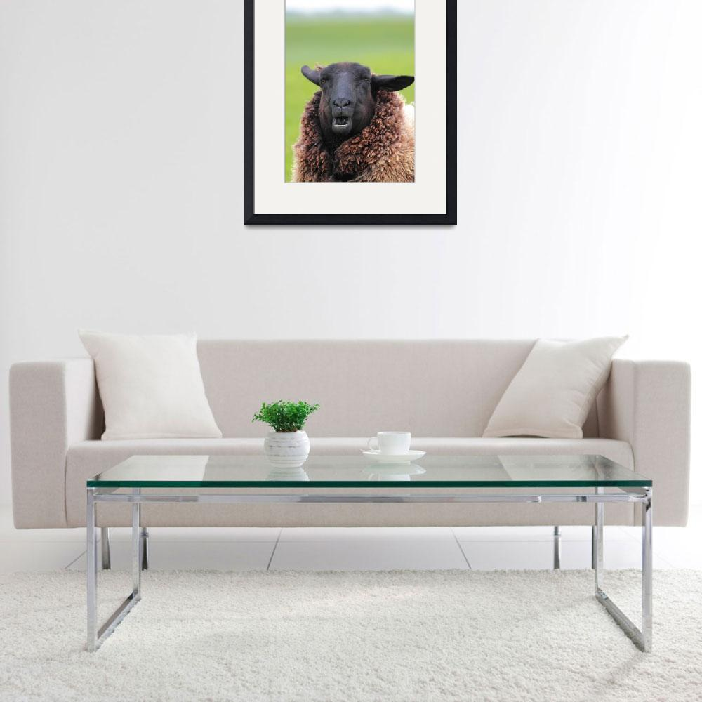 """Sheep Portrait""  (2010) by derausdo"