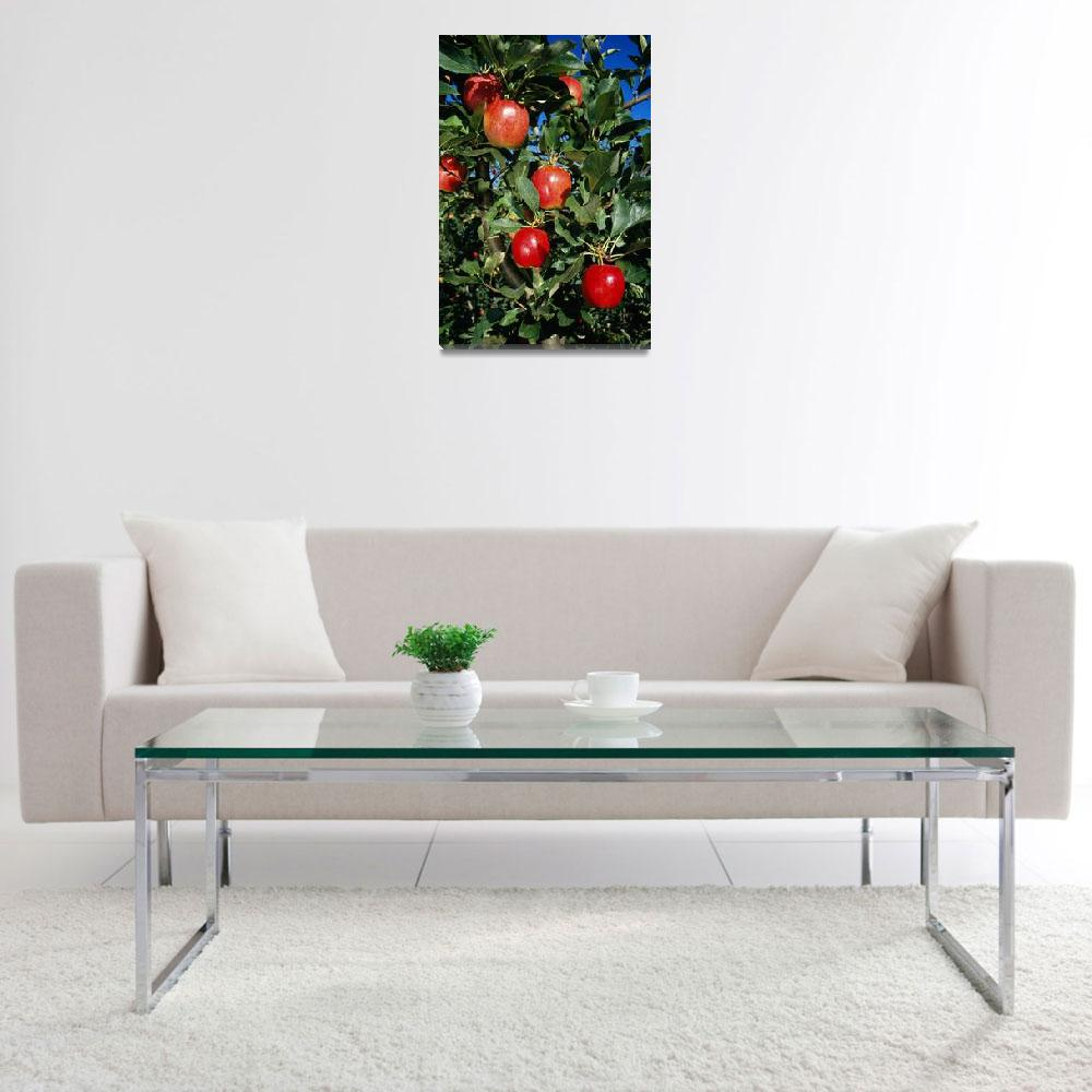 """Red Delicious Apples On Tree""  by Panoramic_Images"