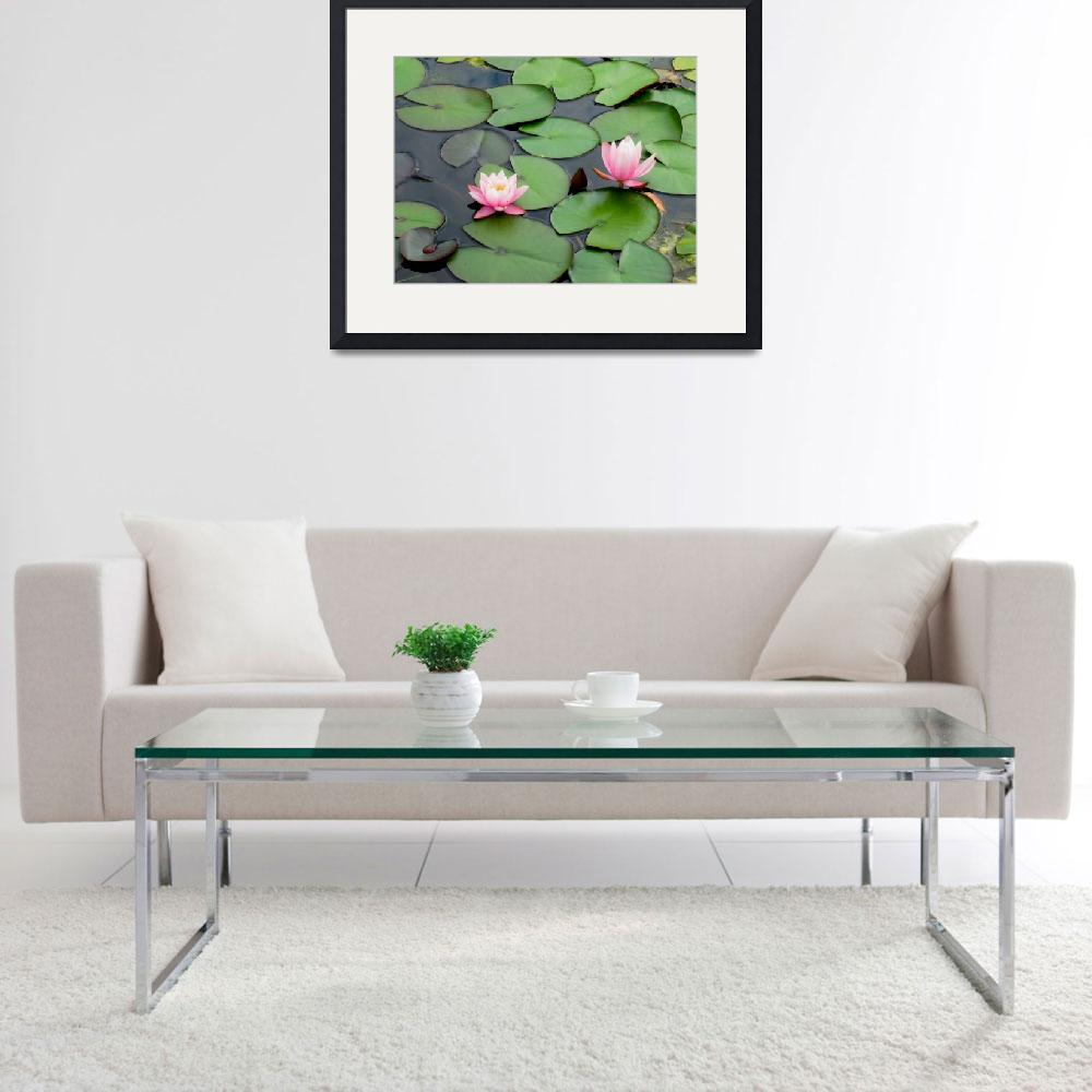 """""""Water Lilies&quot  (2011) by greencricketphoto"""