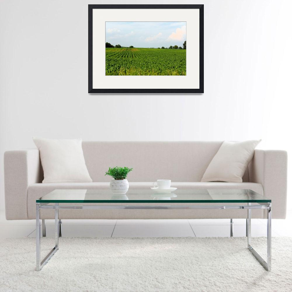 """""""Corn Field with Corn Growing""""  (2010) by fotobits"""