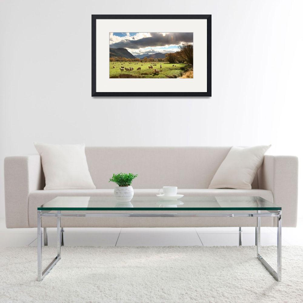 """""""New Zealand sheep pasture&quot  (2008) by wildernessphotographs"""