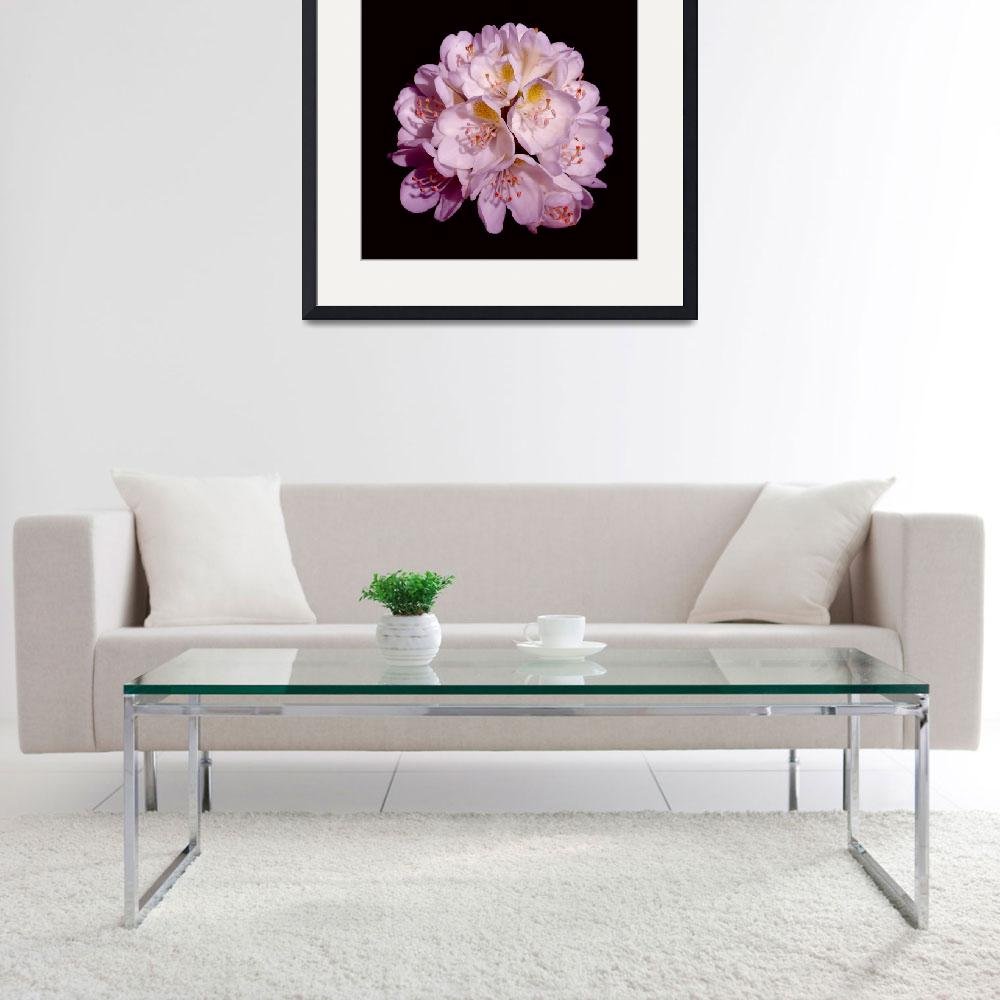 """""""Lavender Rhododendron&quot  (2008) by budo"""