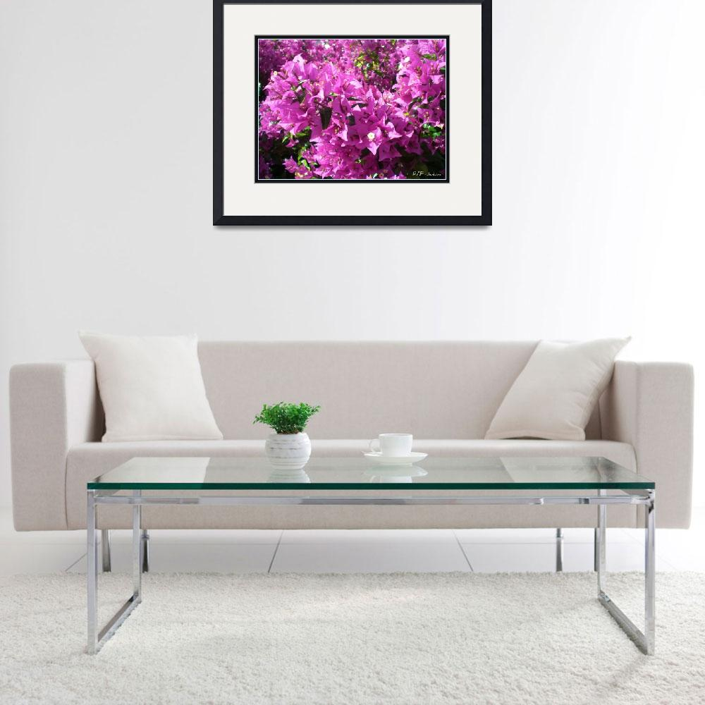 """Bougainvilla Dec in Florida""  (2009) by Olditer"