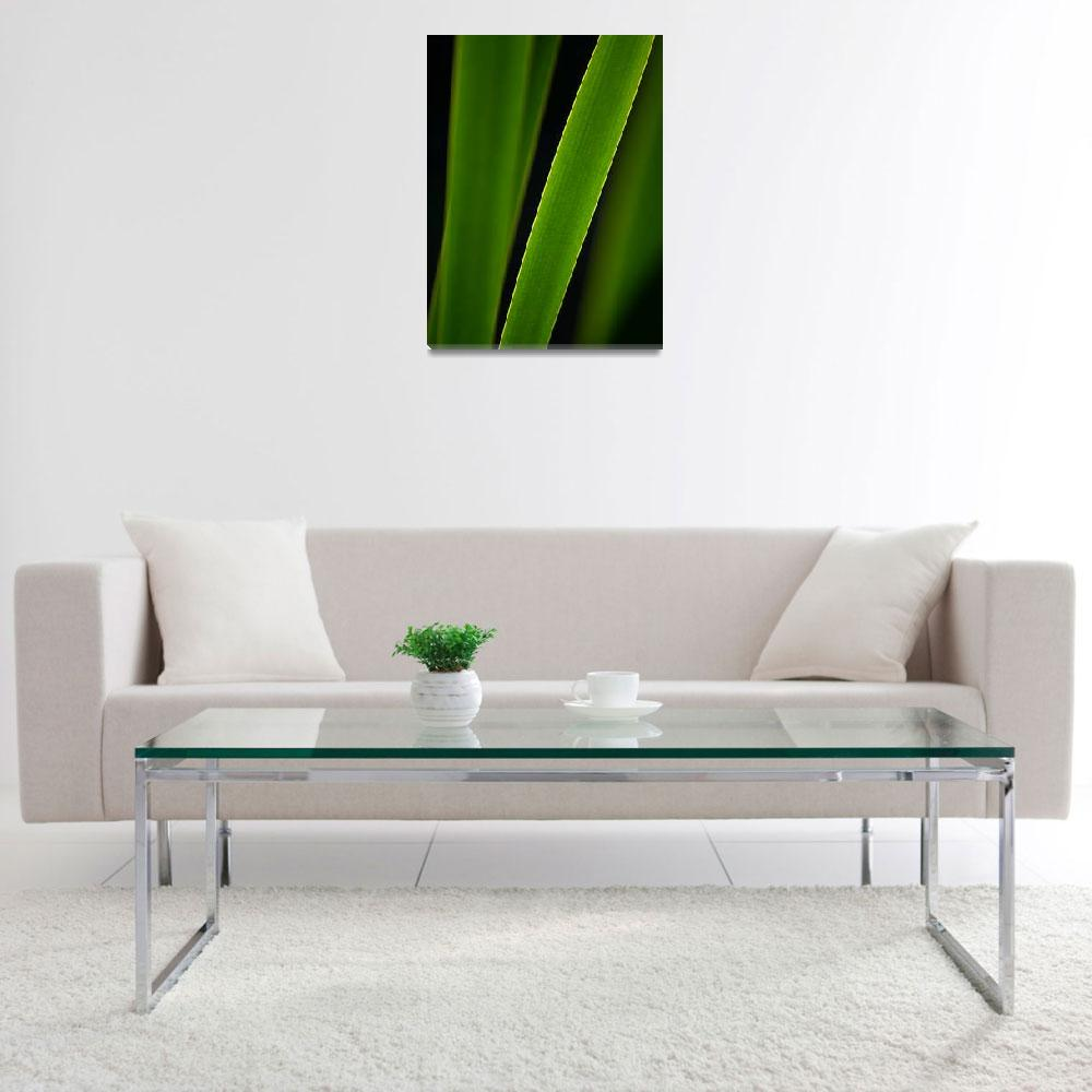 """""""Cattail leaves""""  (2012) by MilanMKM"""