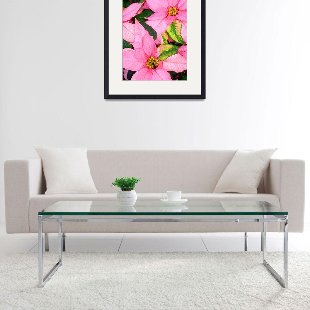 """""""Poinsettias&quot  (2012) by joeyartist"""