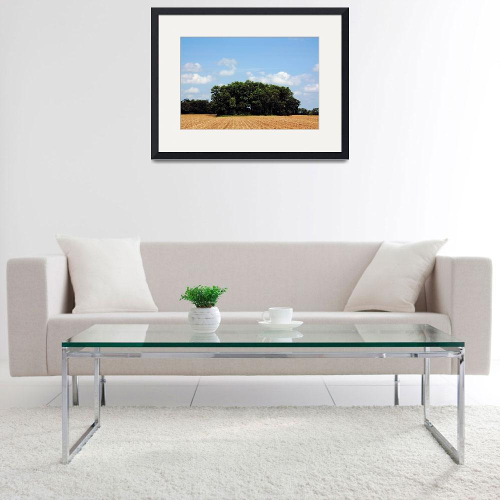 """""""Island of Woods in Corn Field with Blue sky""""  (2010) by fotobits"""