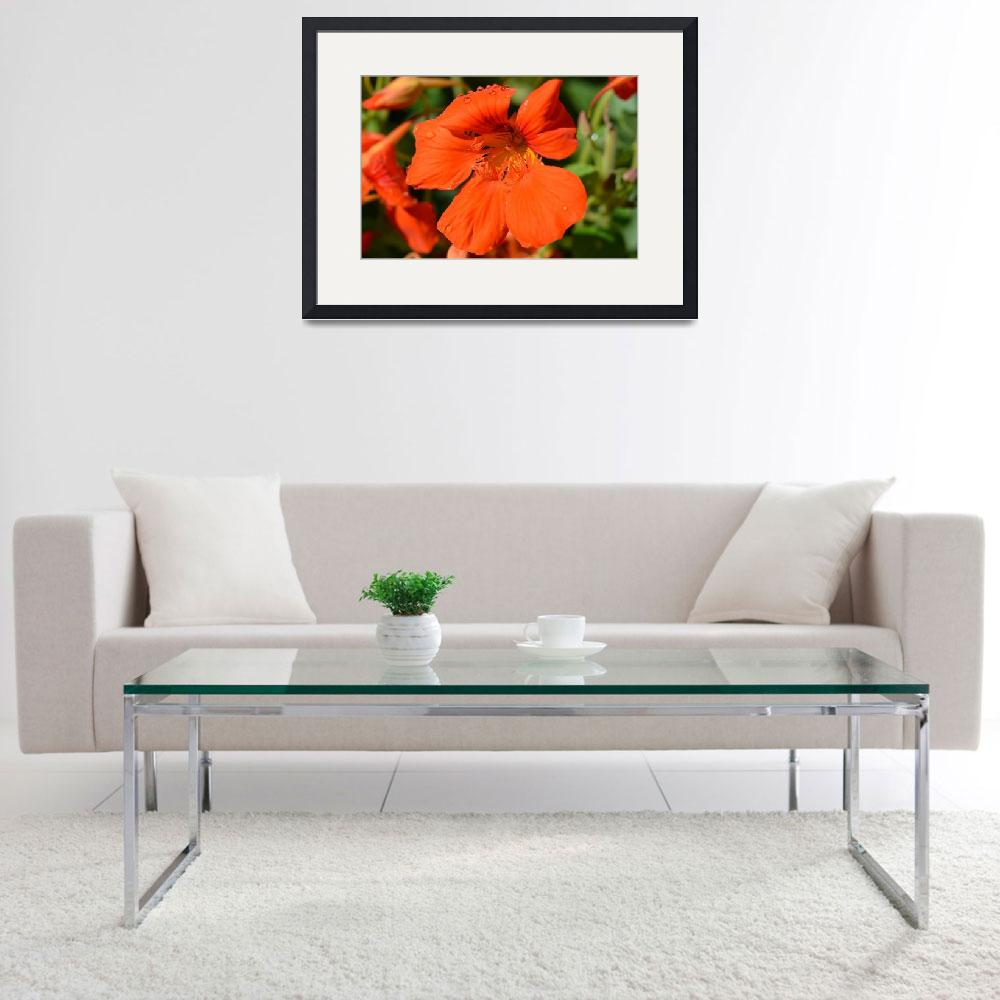 """Orange Nasturtium Bloom&quot  (2011) by SamMirani"