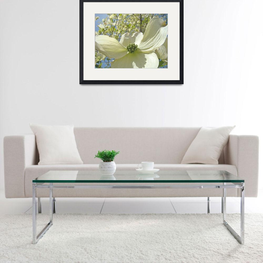 """""""White Dogwood Floral Tree Flowers art prints&quot  (2010) by BasleeTroutman"""