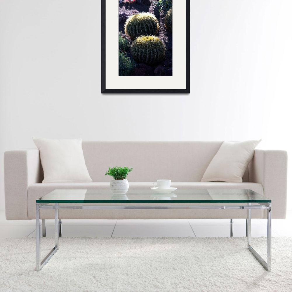 """""""Cactus Balls&quot  (2009) by MindsEyeImagery"""