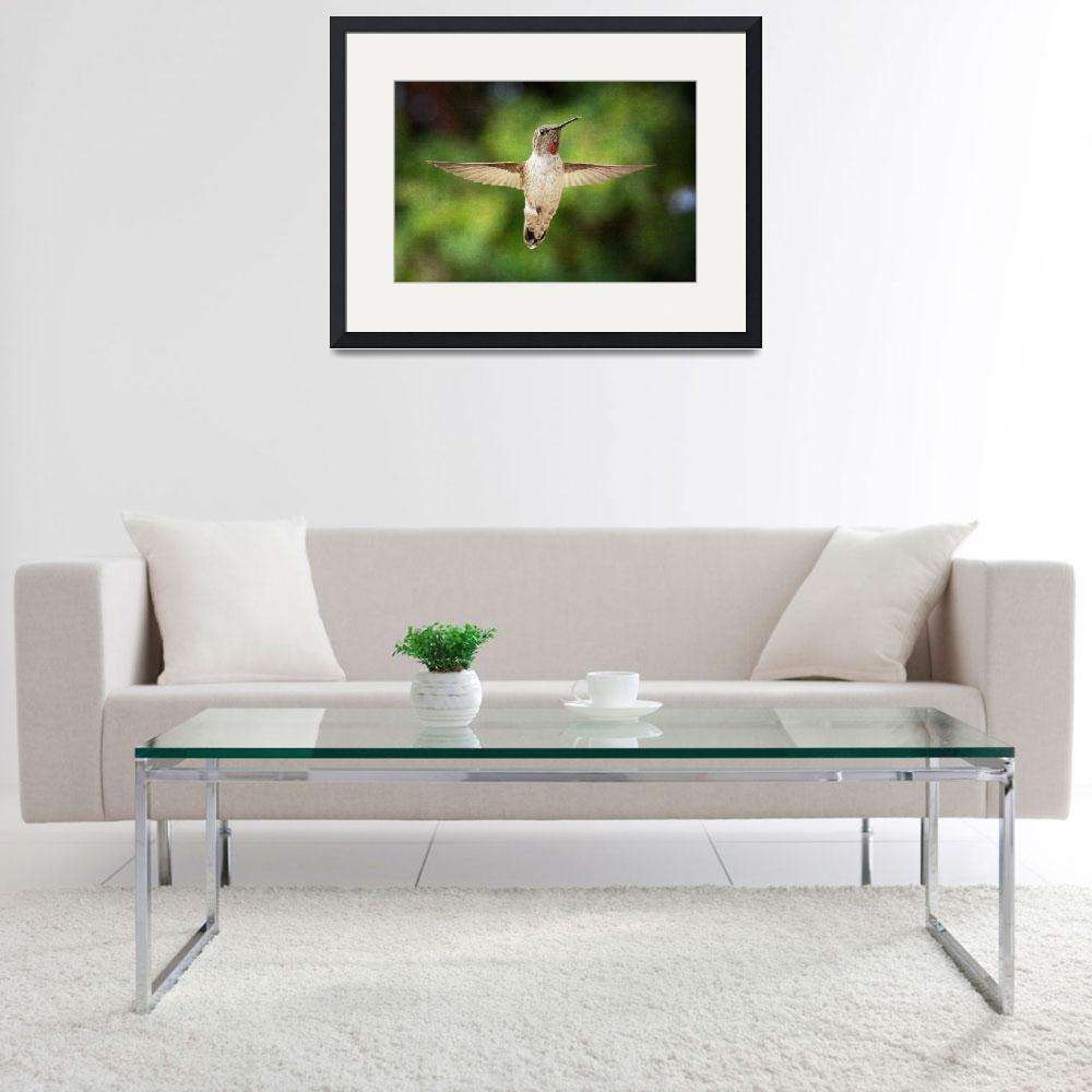"""""""Hummingbird over green&quot  (2009) by NatureVision"""