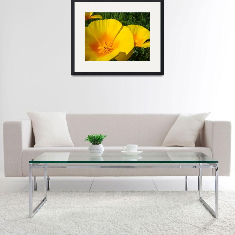 """Christmas Gift Gallery POPPIES Floral Art Gifts""  (2009) by BasleeTroutman"