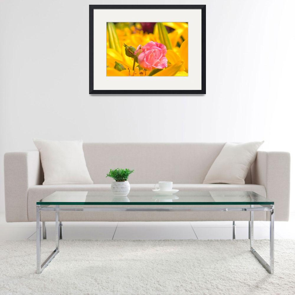 """""""Pink Rose Yellow Background of Flowers""""  (2011) by ElliePhotoArt"""