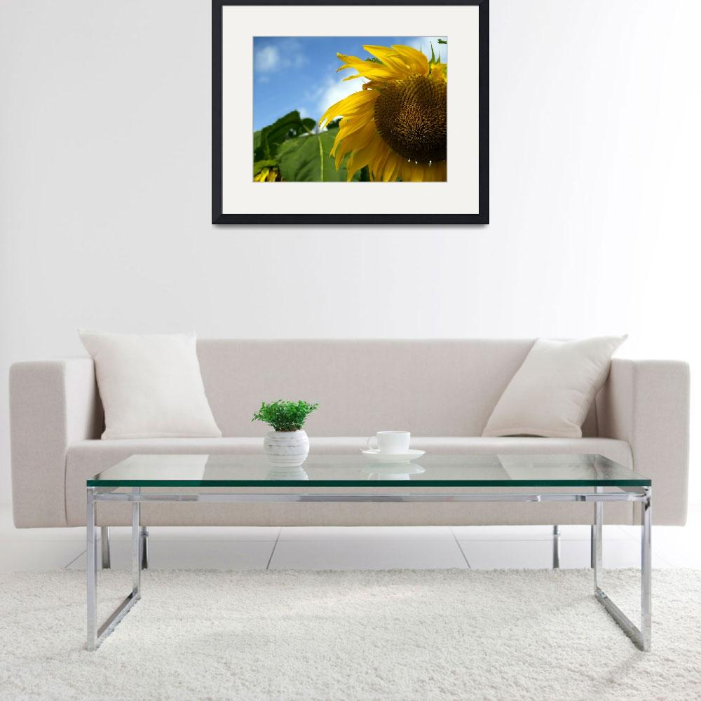 """sunflower""  (2007) by derausdo"