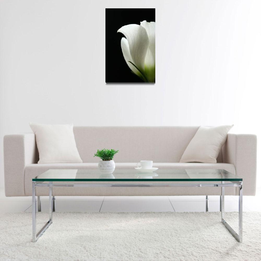 """White Flower""  (2009) by kerrisflowers"