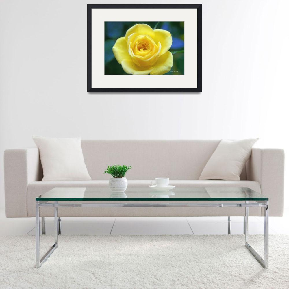"""""""Yellow Rose Of Friendship""""  (2008) by daisyjoan"""
