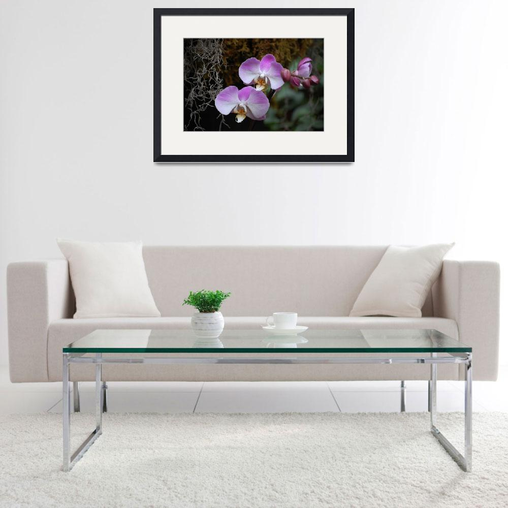 """""""Purple and white orchids""""  (2008) by sharriger"""