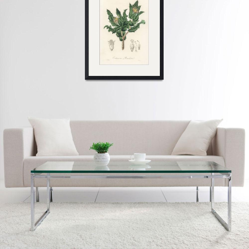 """""""Vintage Botanical Holy thistle""""  by FineArtClassics"""