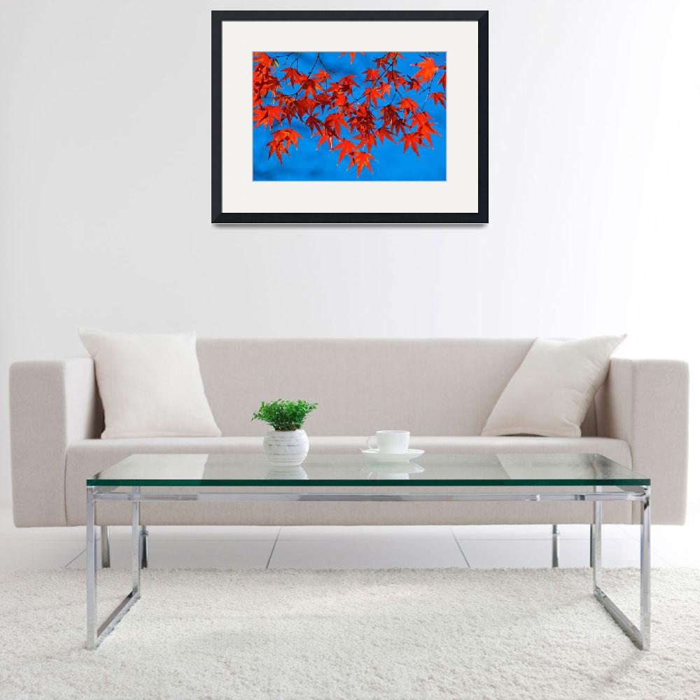 """Red on Blue&quot  (2008) by ImageArt-Photography"
