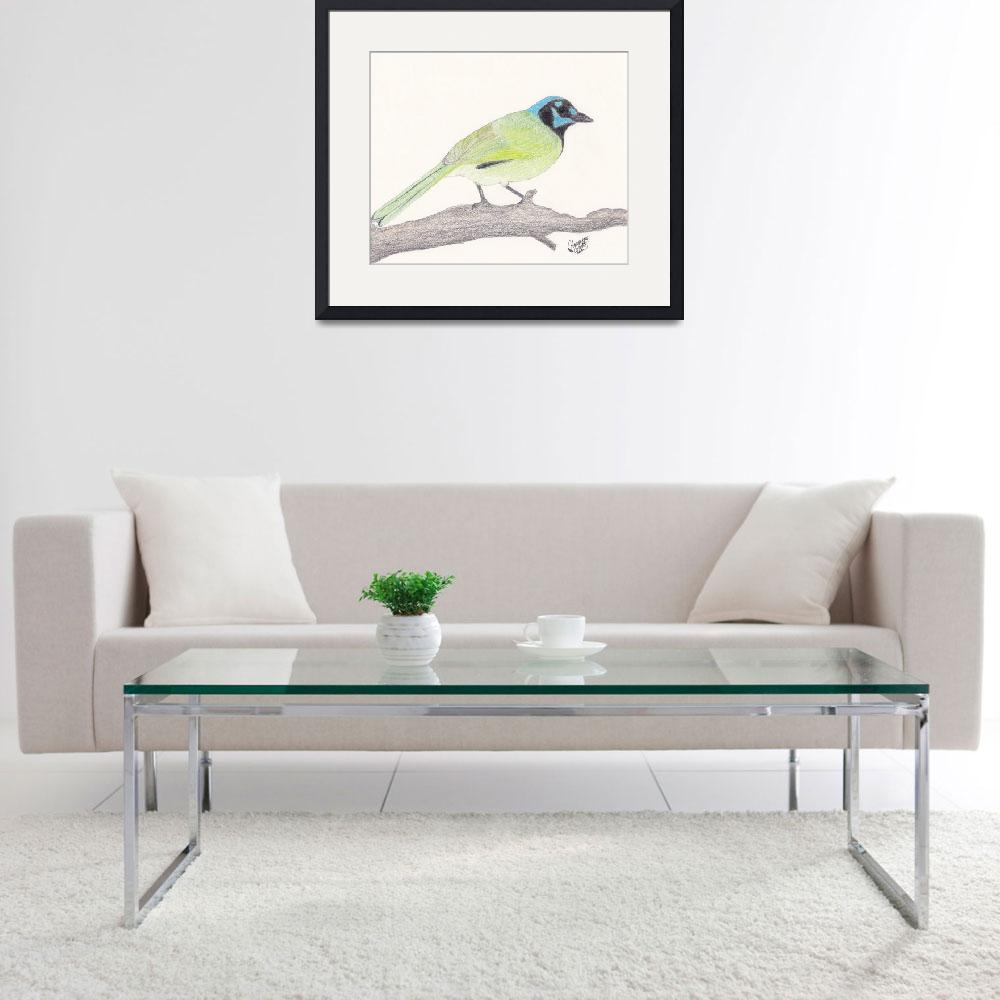 """""""Green Jay&quot  (2010) by HarmonicNature"""