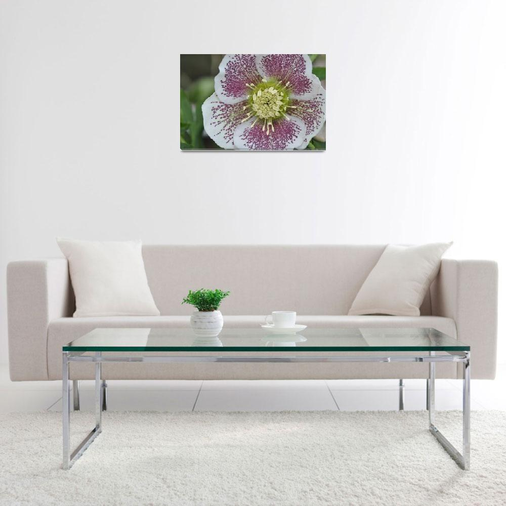 """""""hellebore&quot  (2011) by robhemphill"""