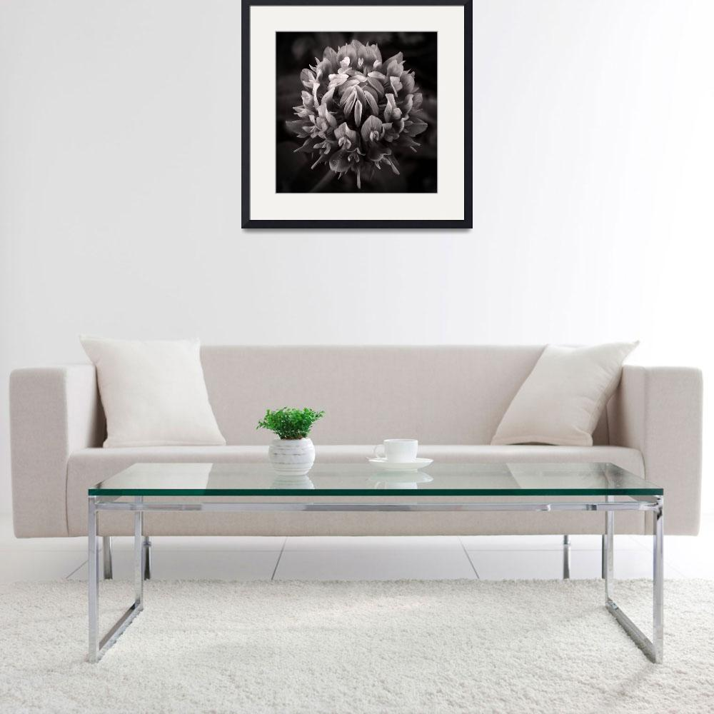 """""""Red Clover In Black And White lll&quot  (2010) by bavosiphotoart"""