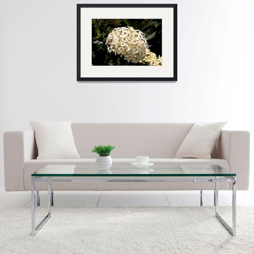 """""""Cayman Islands Plant Life: White Ixora&quot  by RonScott"""