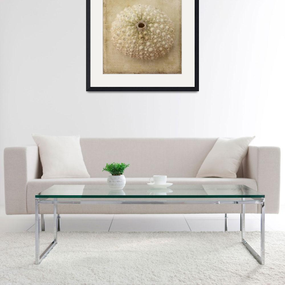 """""""Sepia Sea Urchin&quot  (2015) by judystalus"""