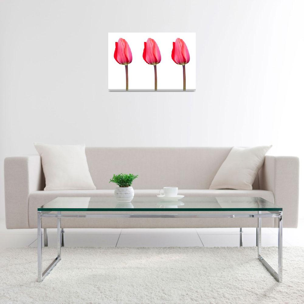 """""""Three Red Tulips in a Row&quot  by NatalieKinnear"""