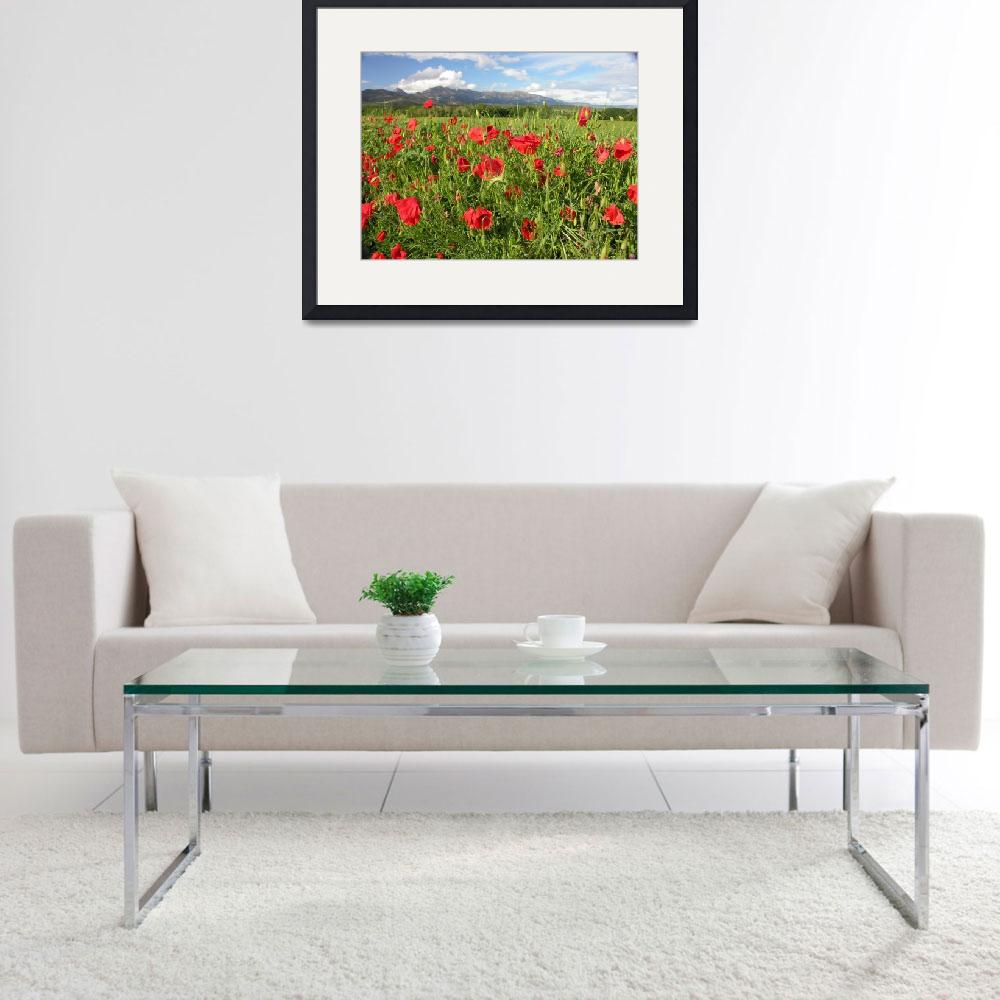 """Poppies and the Pyrenees""  (2008) by Natural_Imagery"