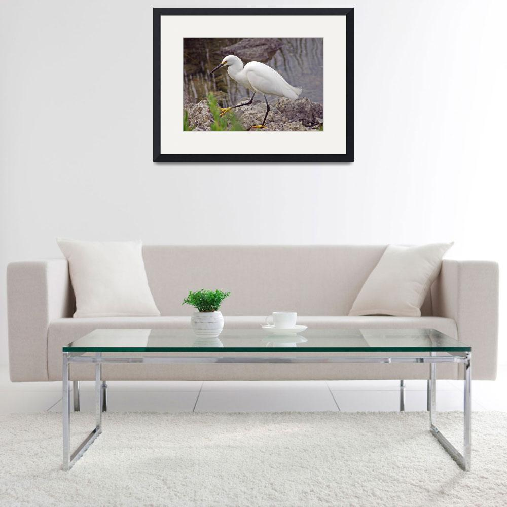 """""""Snowy Egret with pretty feet&quot  (2012) by paulhood"""