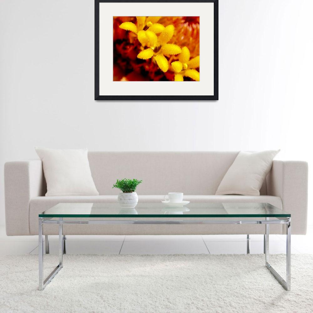 """""""Yellow flower in center of a zinnia&quot  (2007) by ElationAviation"""