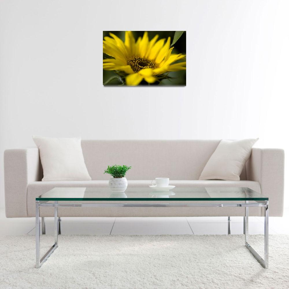 """""""Sunflower&quot  (2009) by eligri"""