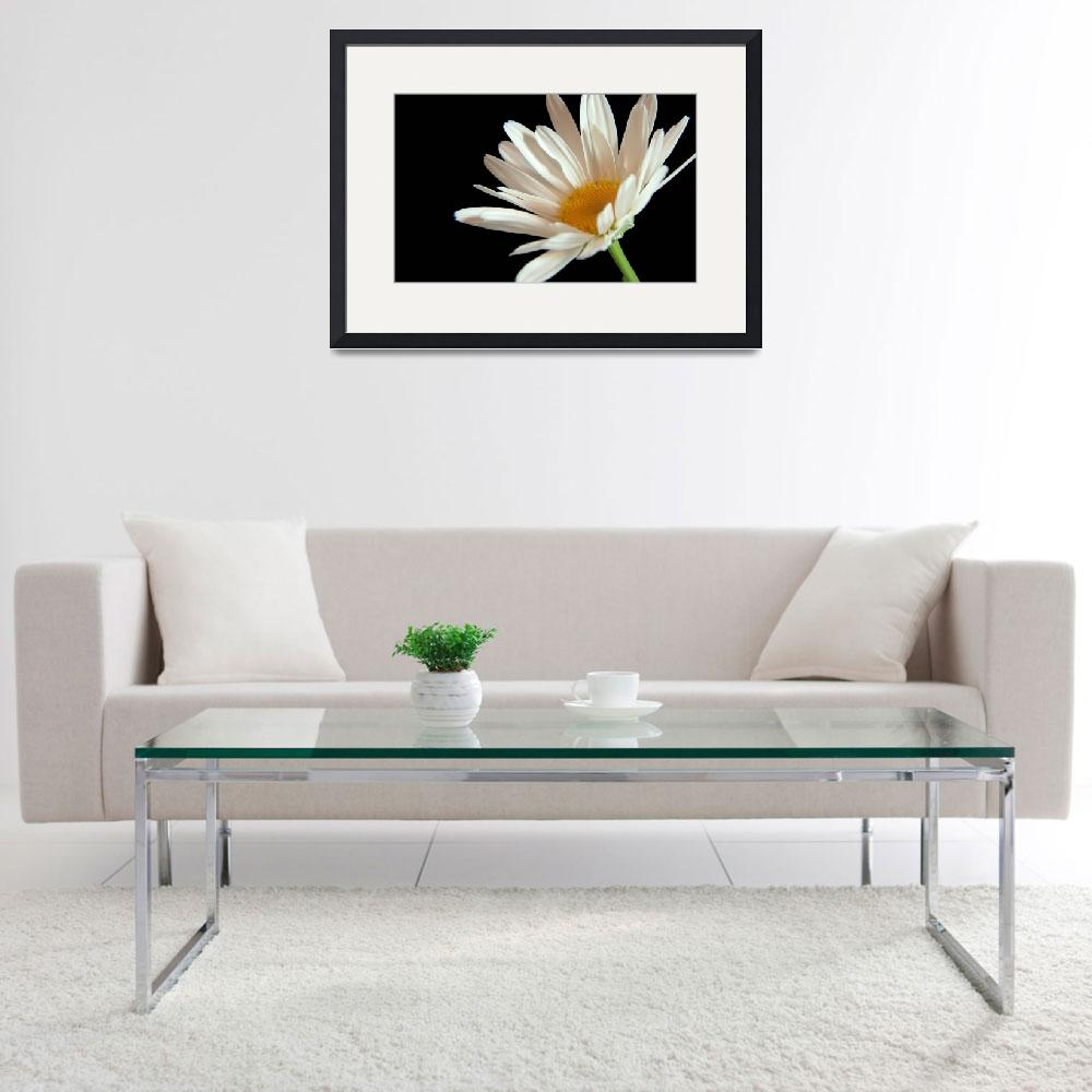"""""""Flower 02b White Spring Daisy&quot  (2010) by Ricardos"""