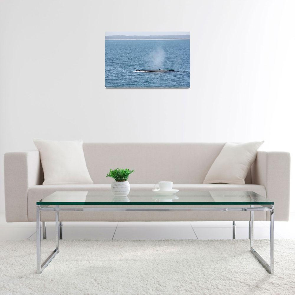 """""""NaP_ Whale Watching009""""  by nevilleprosser"""