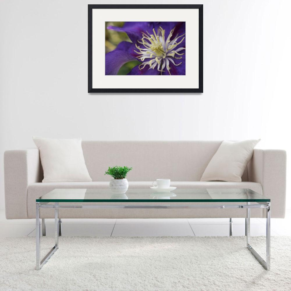 """""""Clematis Blue&quot  by mjphotography"""