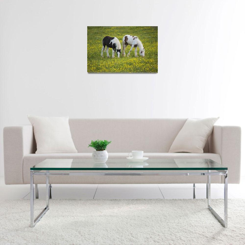 """Horses Grazing, County Tyrone, Ireland""  by DesignPics"